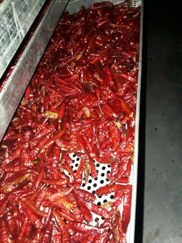 Hầm sấy ớt thành phẩm